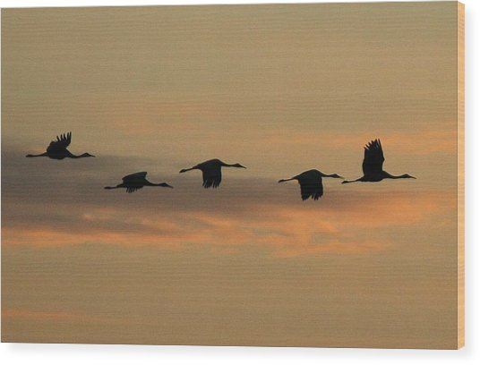 Sandhill Cranes Over Horicon Marsh Wood Print