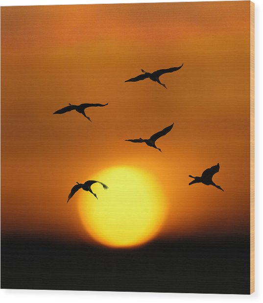 Sandhill Sunset Wood Print