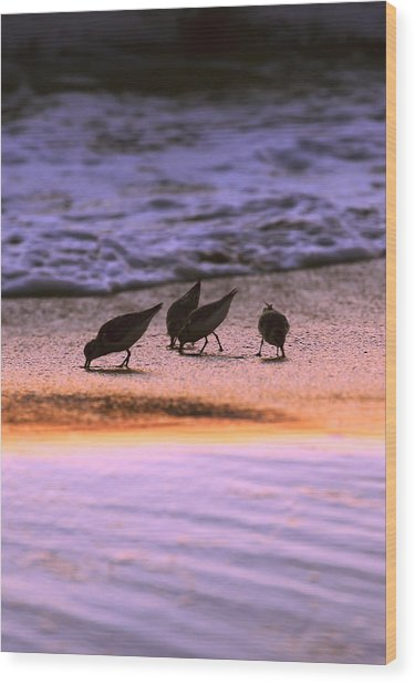 Sandpiper Morning Wood Print