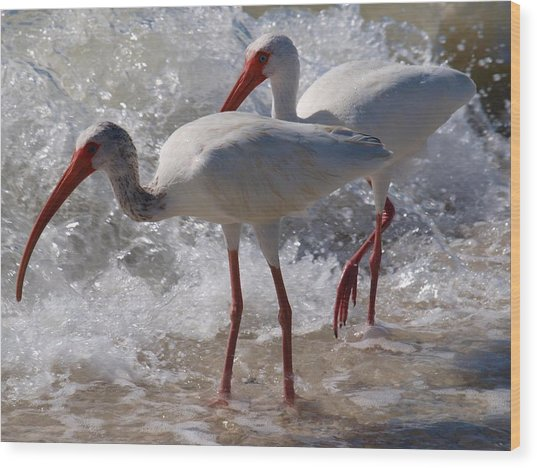 Sanibel White Ibis Wood Print