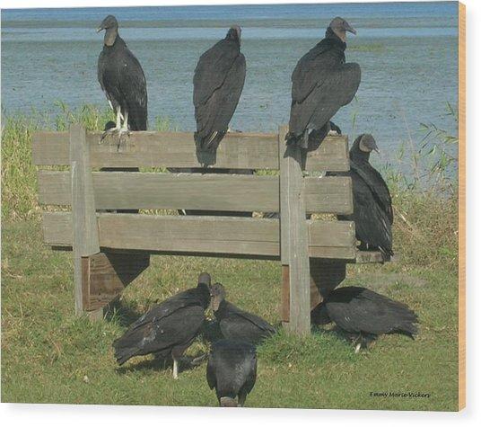 Sarasota Vultures Wood Print
