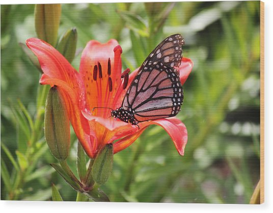 Saskatchewan Prairie Lily And Butterfly Wood Print