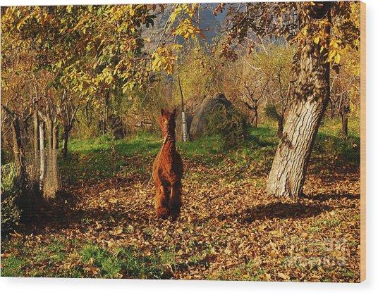 Sassy Alpaca Wood Print by Susan Hernandez