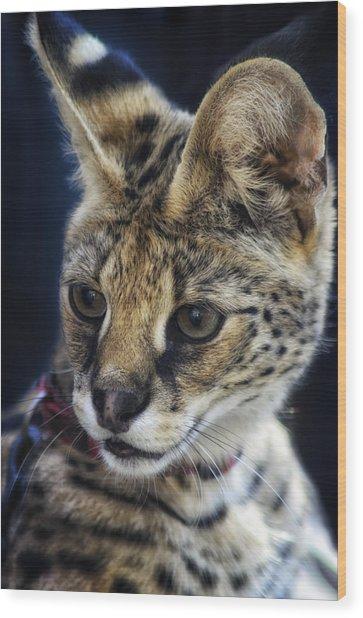 Savannah Jungle Cat Wood Print