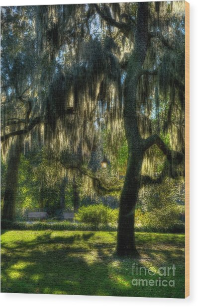 Savannah Sunshine Wood Print