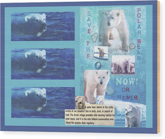Save The Polar Bear Now Or Never Wood Print