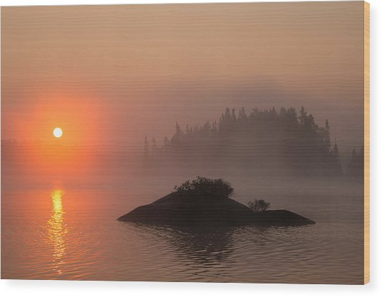 Sawbill Surprise Wood Print