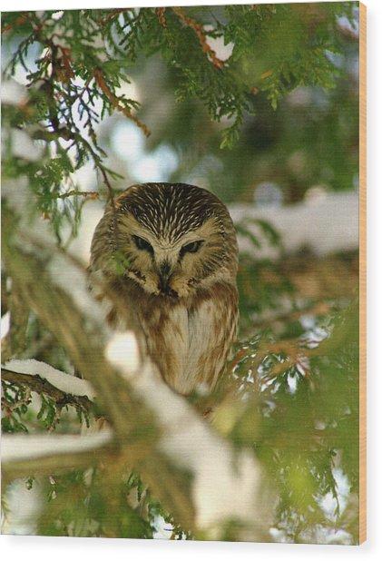 Sawhet Owl Wood Print
