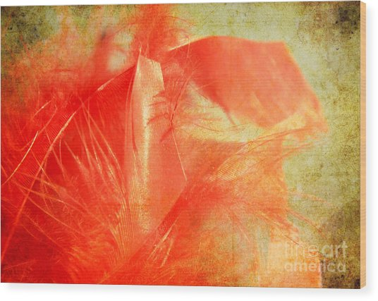 Scarlet On Vintage Wood Print