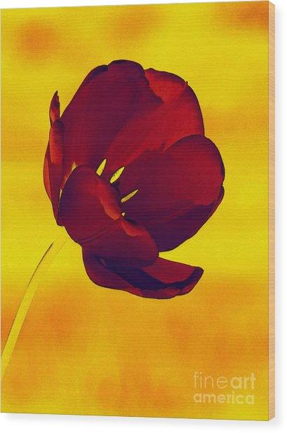 Scarlet Tulip At Sunset Wood Print