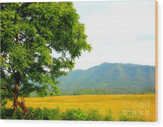 Scenic View Wood Print