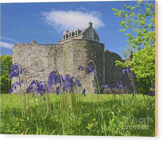 Scots Spring Bluebell Flowers At Scotland Dunstaffnage Castle  Wood Print