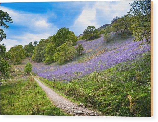 Scottish Bluebells On The Hillside Wood Print by Alex Zorychta