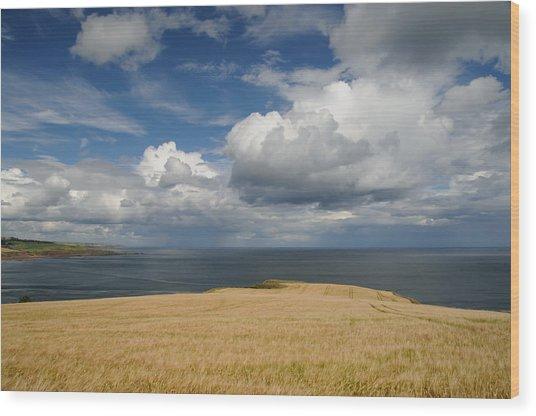 Scottish Coastal Wheatfield Wood Print