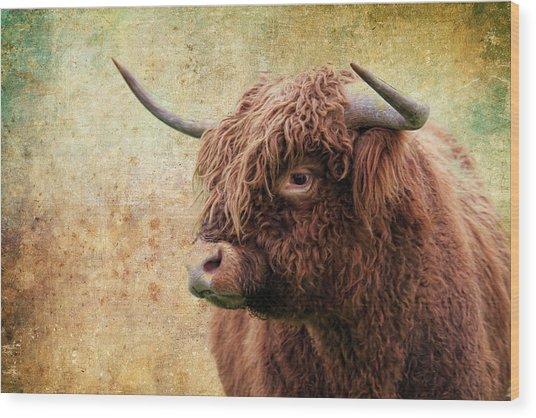 Scottish Highland Steer Wood Print