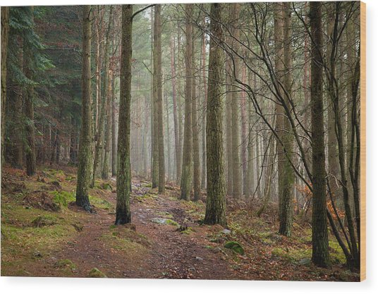 Scottish Woods Wood Print