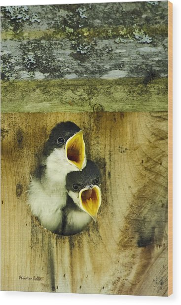 Screaming Hungry Wood Print