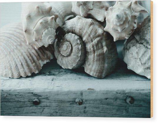 Sea Gifts Wood Print