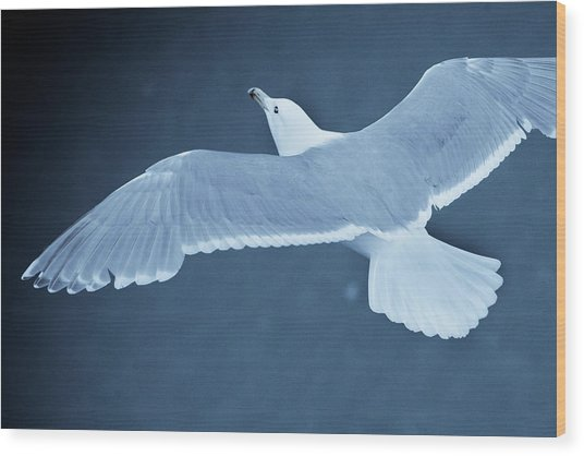Sea Gull Over Icy Water Wood Print