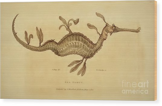 Sea Horse Wood Print by Busby