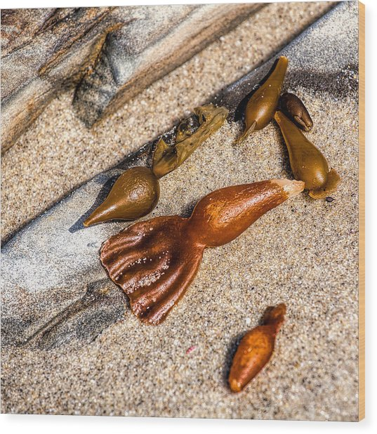 Sea Jewels Wood Print by Peter Tellone