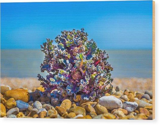 Sea Kale. Wood Print