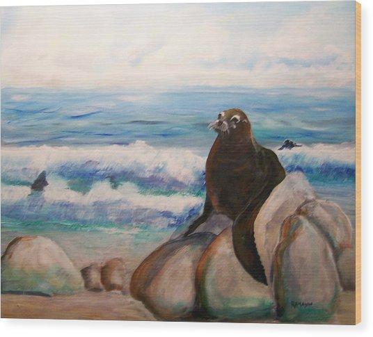 Sea Lion Wood Print by Rich Mason