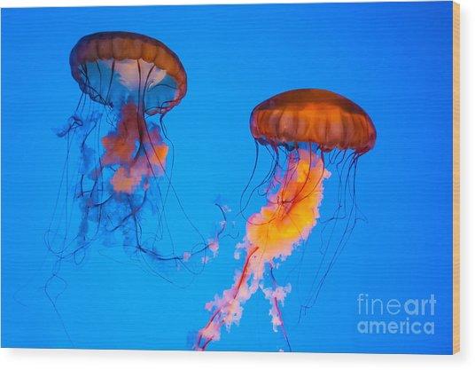 Sea Nettles Wood Print