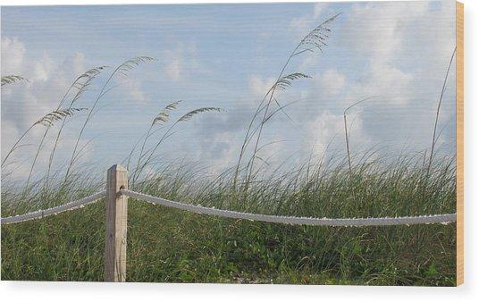 Sea Oat Garden Wood Print by Rosie Brown