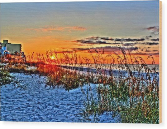 Sea Oats At Sunrise Wood Print