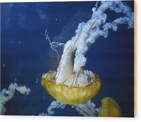 Sea Orchid Wood Print