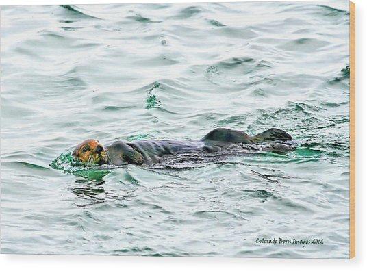 Sea Otter In Northern Cali Wood Print by Rebecca Adams