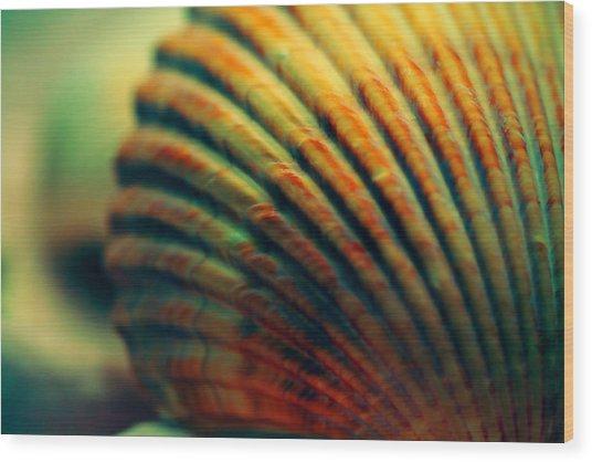 Sea Shell Art 1 Wood Print