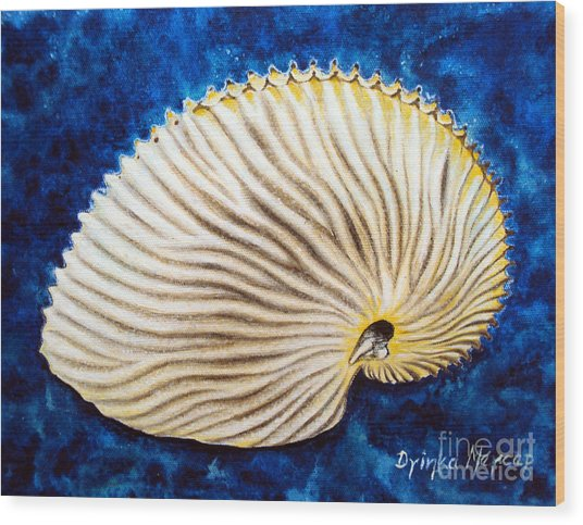 Sea Shell Original Oil On Canvas No.2. Wood Print by Drinka Mercep