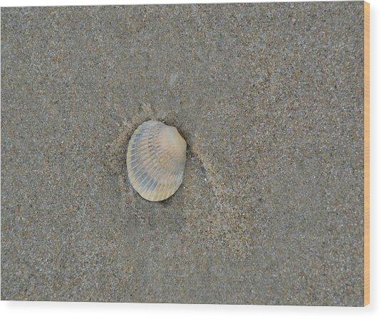 Sea Shell Sally Wood Print by JAMART Photography