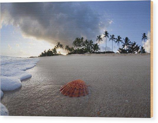 Sea Shell Sunrise Wood Print