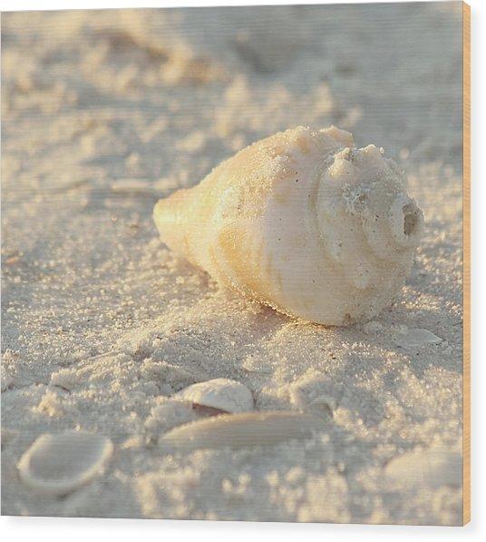 Wood Print featuring the photograph Sea Shells by Kim Hojnacki
