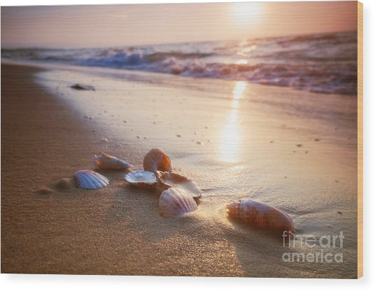 Sea Shells On Sand Wood Print
