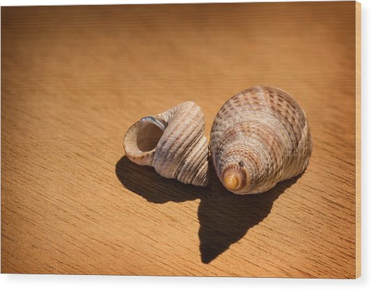 Sea Shells_3 Wood Print by Joe Hudspeth