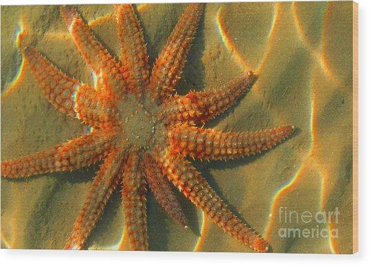 Sea Star Wood Print