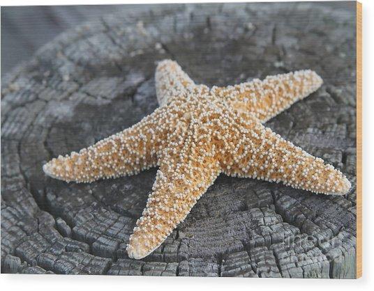 Sea Star On Post Wood Print