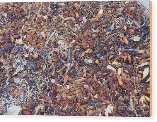 Sea Stuff Wood Print