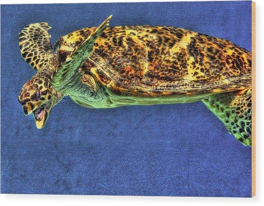 Sea Turtel Wood Print by Karen Walzer