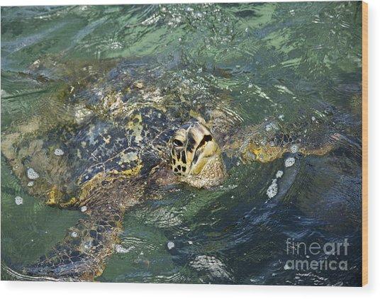 Sea Turtle Surface Wood Print by Paul Karanik