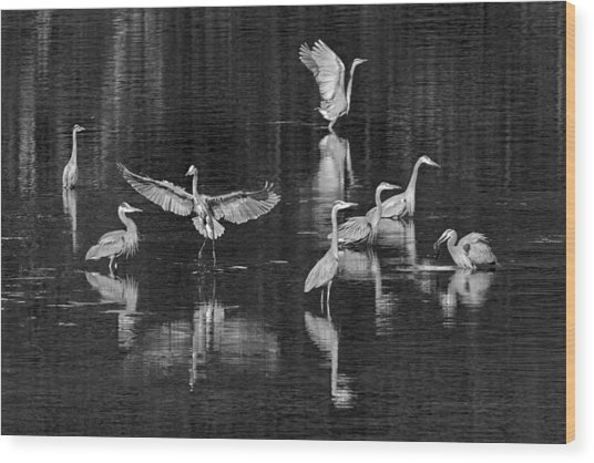 Seabeck Herons Wood Print