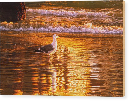 Seagul Reflects On A Golden Molten Shore Wood Print