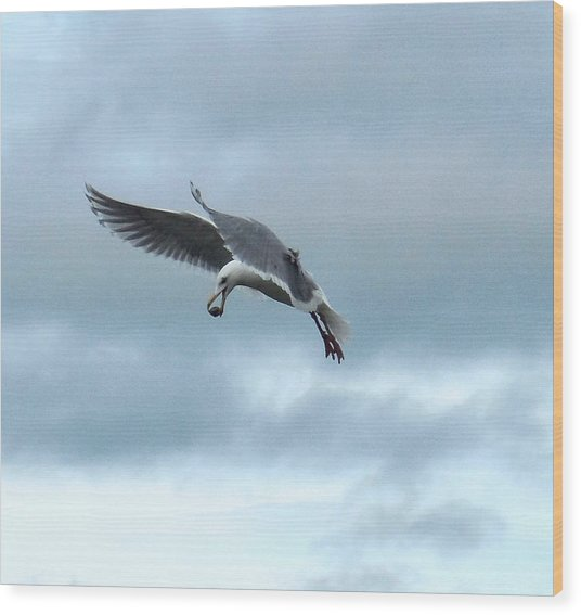 Seagull And His Breakfast Wood Print