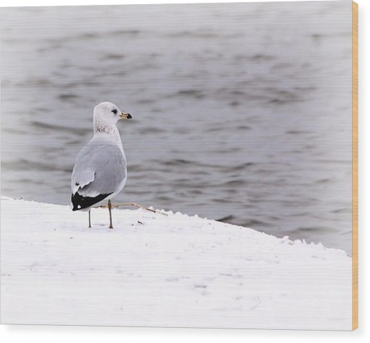Seagull At The Lake In Winter Wood Print by Elizabeth Budd