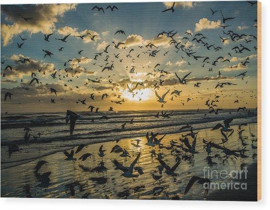 Seagull Migration Wood Print by Mina Isaac