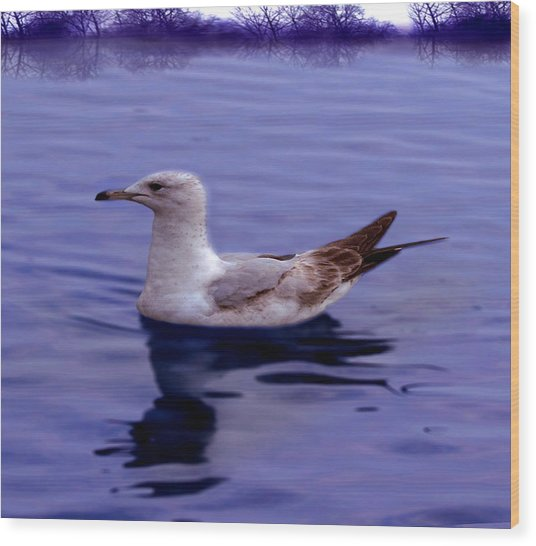 Seagull In Blue Wood Print by Sakna T